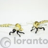 Glazen libelle