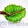 groene blad van glas loranto,