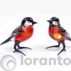 Vogel rood zwart roodborstje,